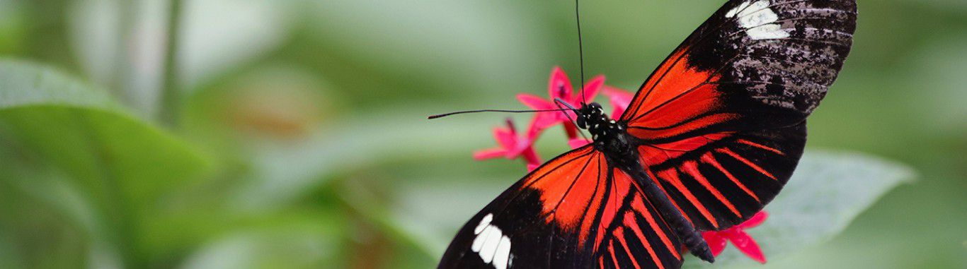 A red butterfly on a leaf