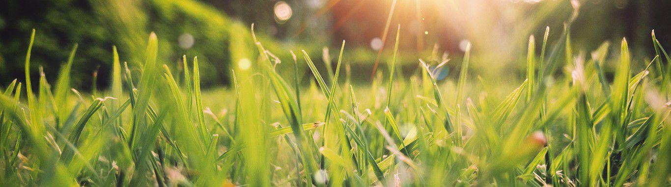 Close up photo of grass