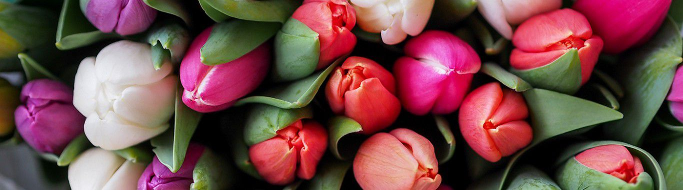 A collection of Tulips