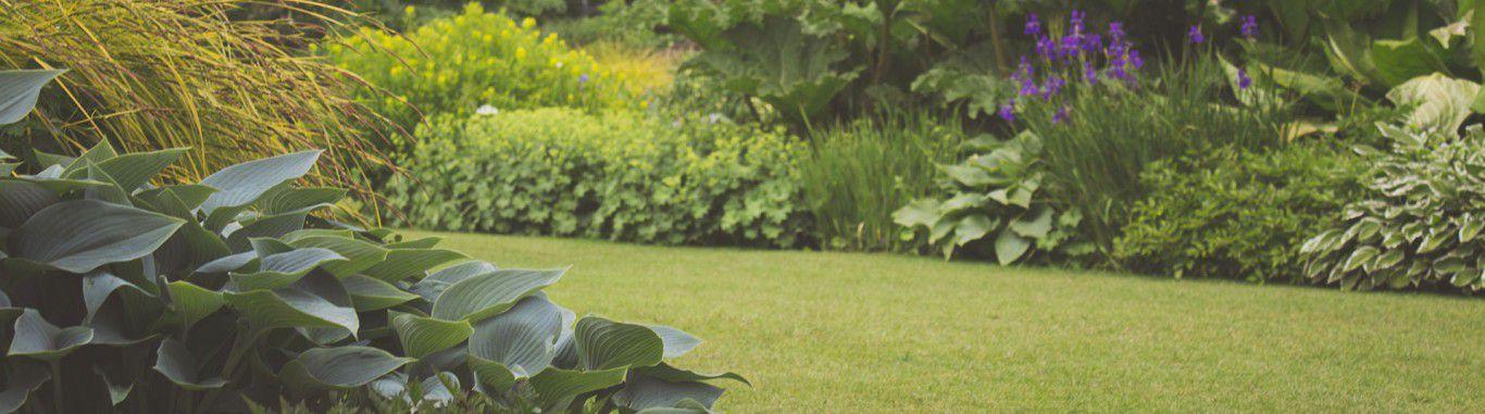 A photo of a garden