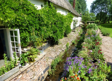 The gardens at Mill house