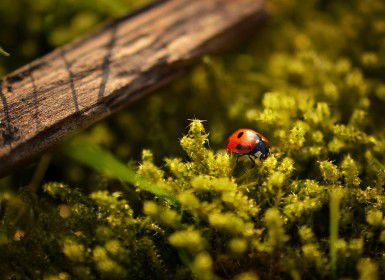 A ladybird on a bush