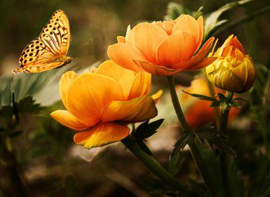 A butterfly on a yellow flower